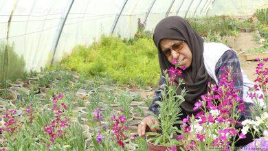 صورة العربي الجديد: زهرة عريبي.. جزائرية تقهر السرطان بالزهور