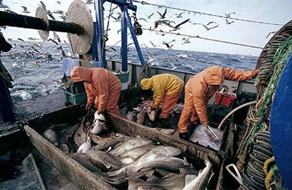 صورة انطلاق حملة صيد التونة الحمراء بمشاركة 22 باخرة