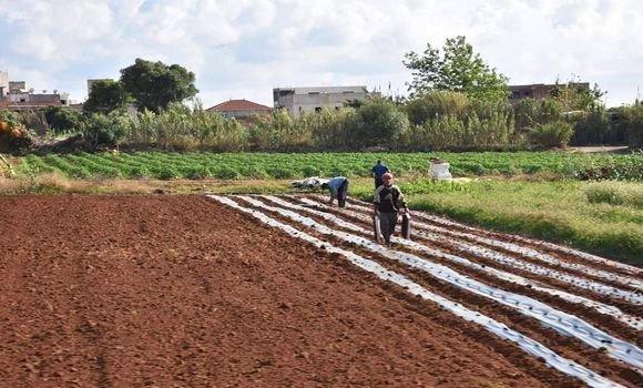 صورة زراعة الفطر.. فرع جديد بحاجة إلى مرافقة تيزي وزو