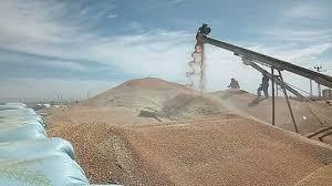 صورة سنة 2019 بخنشلة.. تباشير مشروع إستصلاح 16 ألف هكتار بصحراء النمامشة