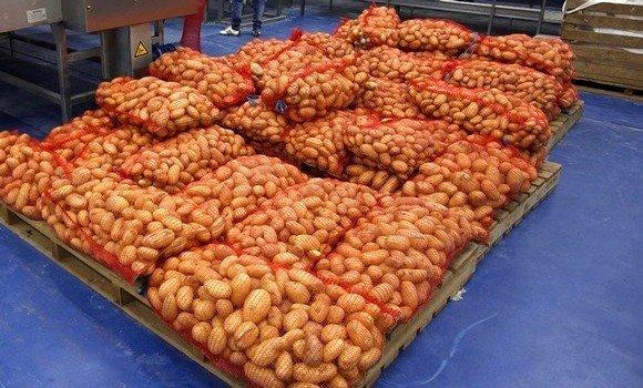 صورة الجزائر ستتوقف نهائيا عن إستيراد بذور البطاطا بحلول عام 2022
