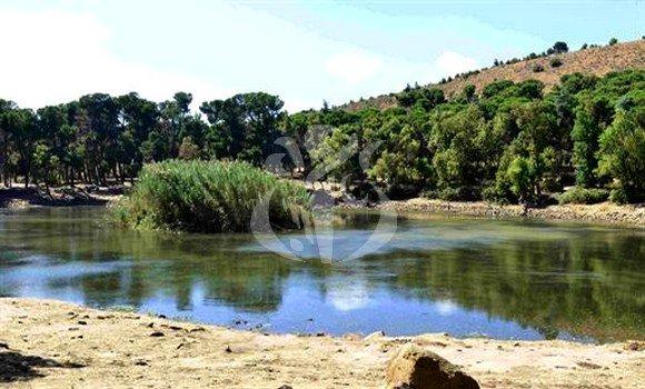 صورة قسنطينة: إطلاق حملة تحسيسية لحماية الثروة الغابية