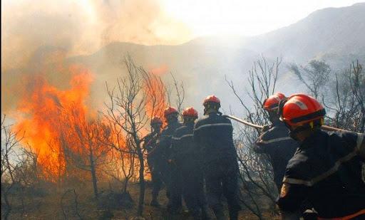 صورة الحماية المدنية: أكثر من 15 ألف عون وإمكانيات معتبرة لمكافحة حرائق الغابات