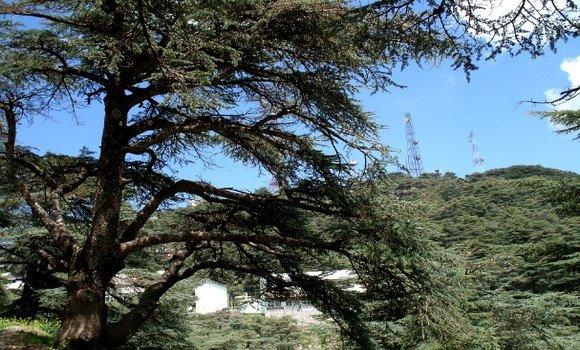 صورة البليدة: جبال الشريعة تستعيد زوارها بعد عدة أشهر من الحجر الصحي