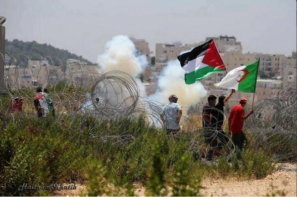 صورة الفلسطينيون يدعون حكام العرب للاقتداء بالرئيس تبون