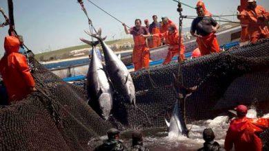 صورة إنطلاق حملة صيد تونة الحمراء في 26 ماي المقبل