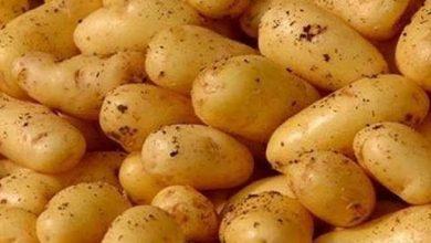 صورة 55 دينار لسعر الكيلوغرام الواحد من البطاطا من أجل ضبط السوق واستقرار الأسعار