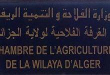 """صورة الغرفة الفلاحية لولاية الجزائر تعتزم إبرام اتفاقية مع وكالة """"أناد"""""""