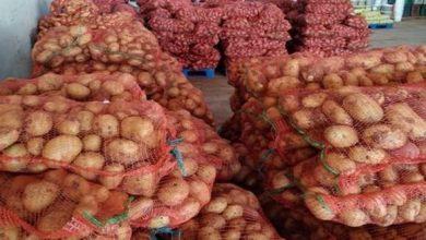صورة رزيق: الشروع قريبا في تسويق البطاطس المحجوزة بسعر 50 دج للكلغ الواحد