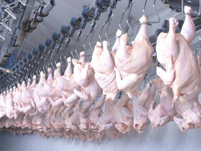Photo de Guelma  Plus de 825 tonnes de viandes blanches pour alimenter le marché local pendant le ramadhan