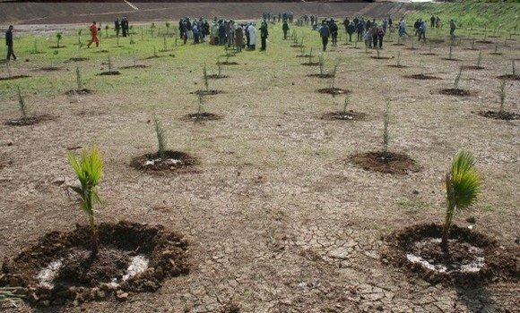 Photo de Lancement du programme national de plantation de 41 millions d'arbres dès octobre prochain